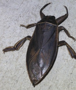 The picture of a bug